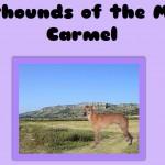 mountcarmel_landingpage_picture